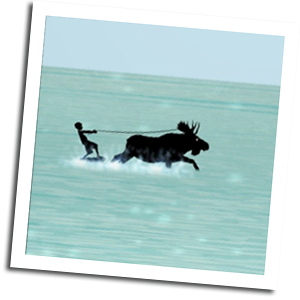 Moko appears to be water skiing, pulled behind by a moose.