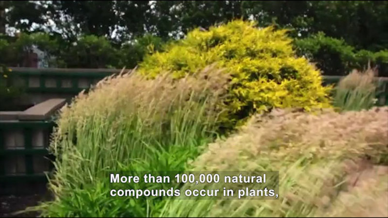 Still image from Solving Biology's Mysteries With Plants