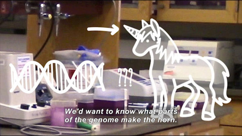 Still image from #askMIT: Could You Make a Unicorn by Crossing DNA?