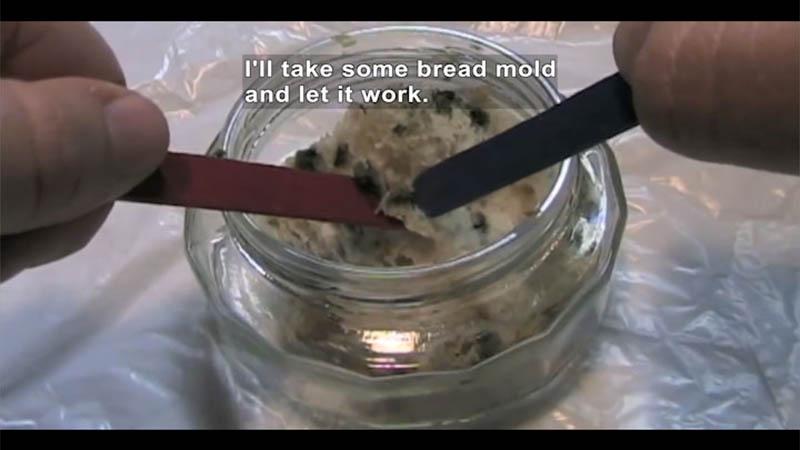 Still image from Bread Mold Kills Bacteria