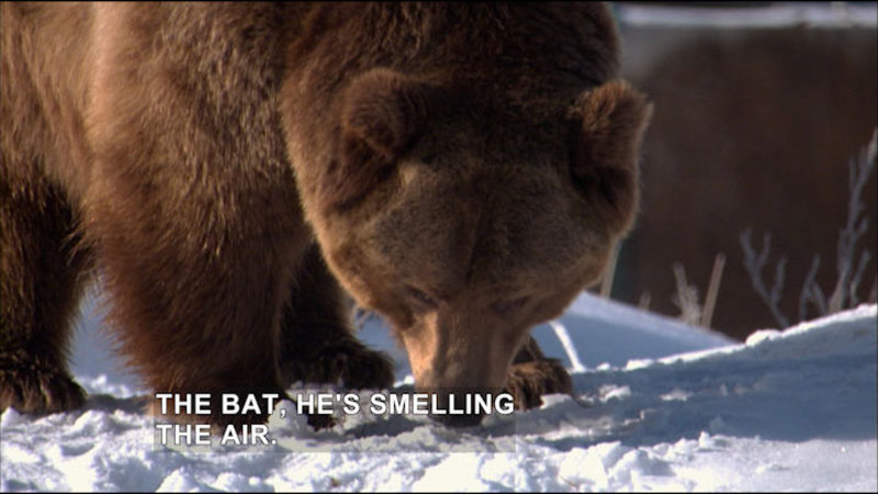 Expedition Wild: Grizzly Rescue