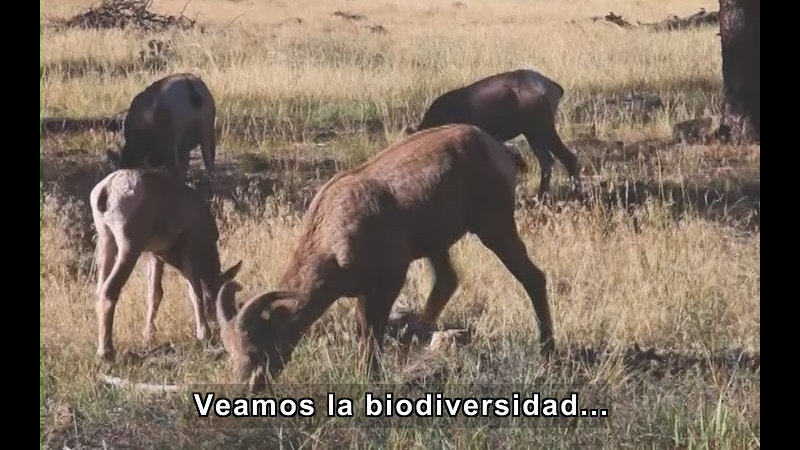 Still image from Biodiversity (Spanish)