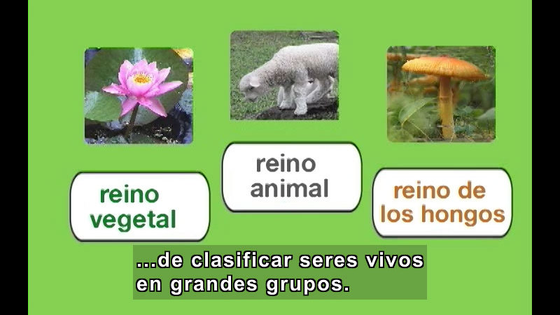 Still image from Grouping Living Things (Spanish)