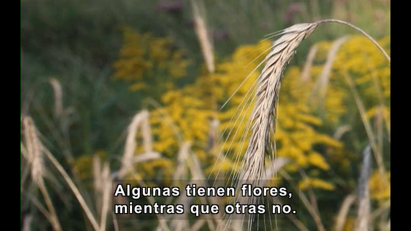 Still image from Plant Life Cycles (Spanish)