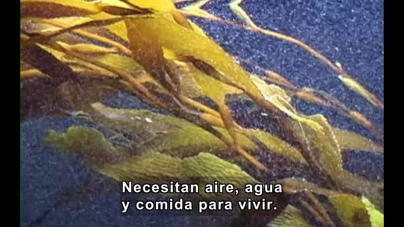 Still image from Plants (Spanish)