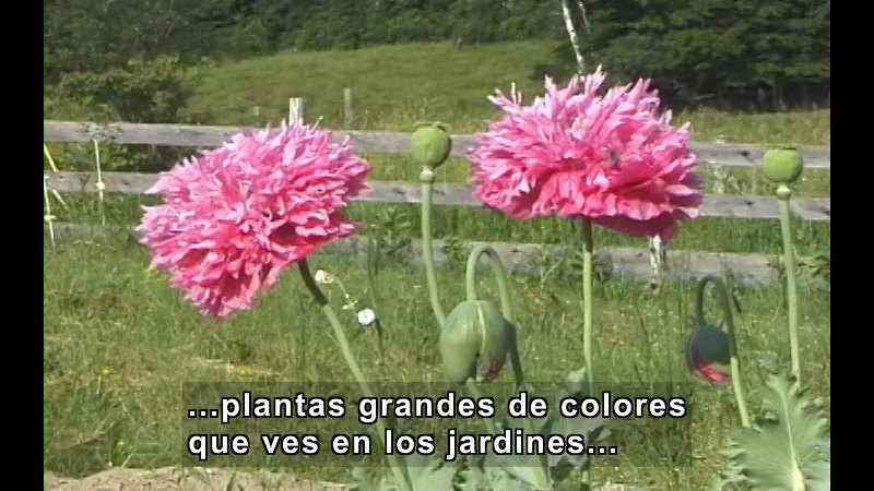 Still image from Plants With Flowers (Spanish)