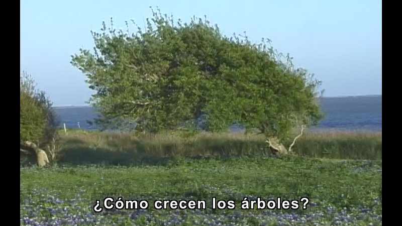 Still image from Trees (Spanish)