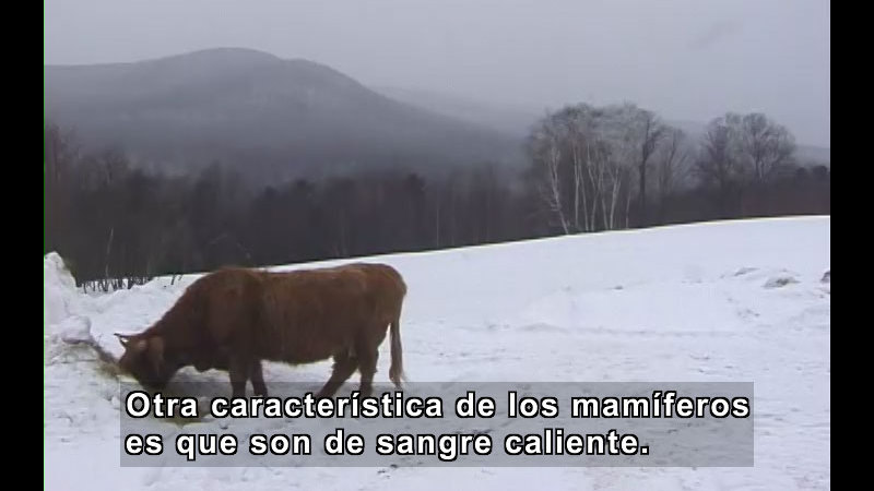 Still image from What Is a Mammal? (Spanish)