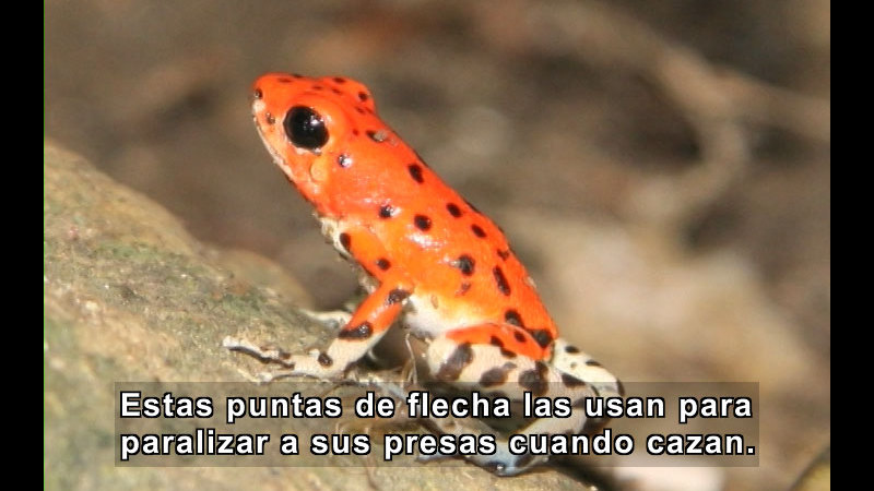 Still image from What Is an Amphibian? (Spanish)