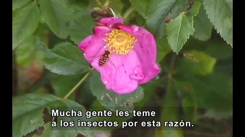 Still image from What Is an Insect? (Spanish)