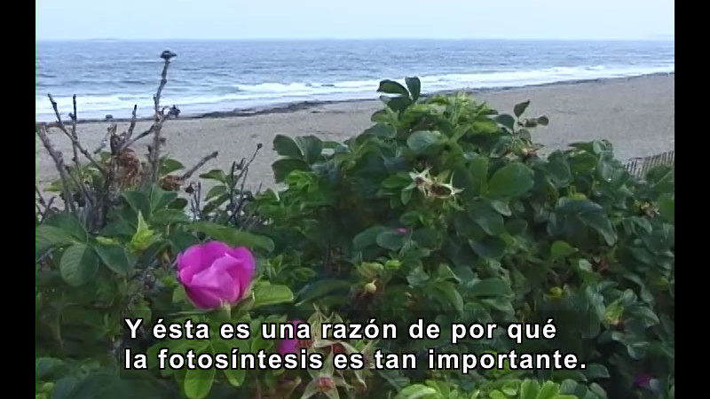 Still image from Activities of Plants (Spanish)