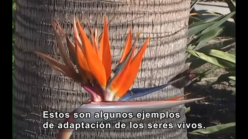 Still image from Adaptations (Spanish)