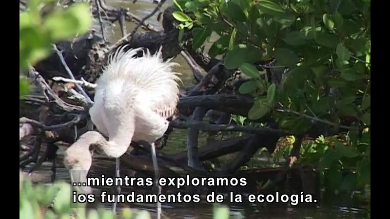 Still image from Ecology Fundamentals (Spanish)