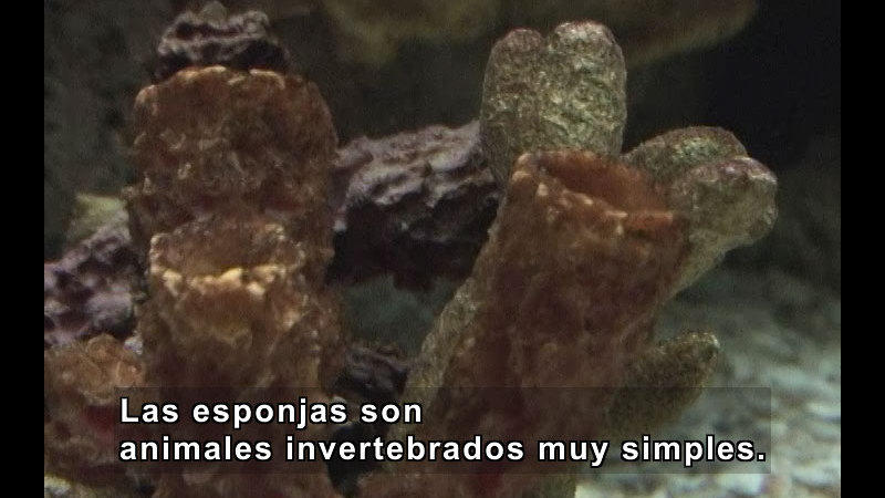 Still image from Simple Animals (Spanish)