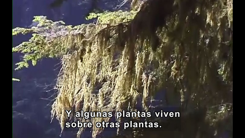 Still image from What Are Plants? (Spanish)