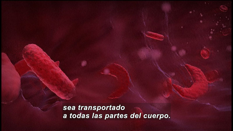 Still image from The Making of the Fittest: Natural Selection in Humans (Spanish)