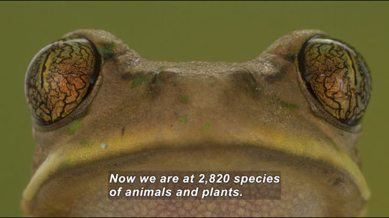 Still image from Surveying Gorongosa's Diversity