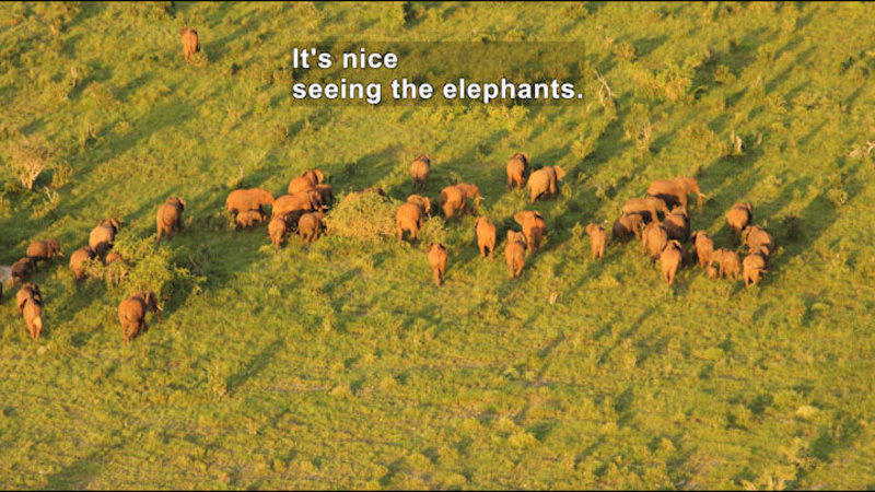 Still image from The Great Elephant Census