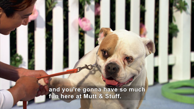 Still image from Mutt & Stuff: Hip-Hop Dogs