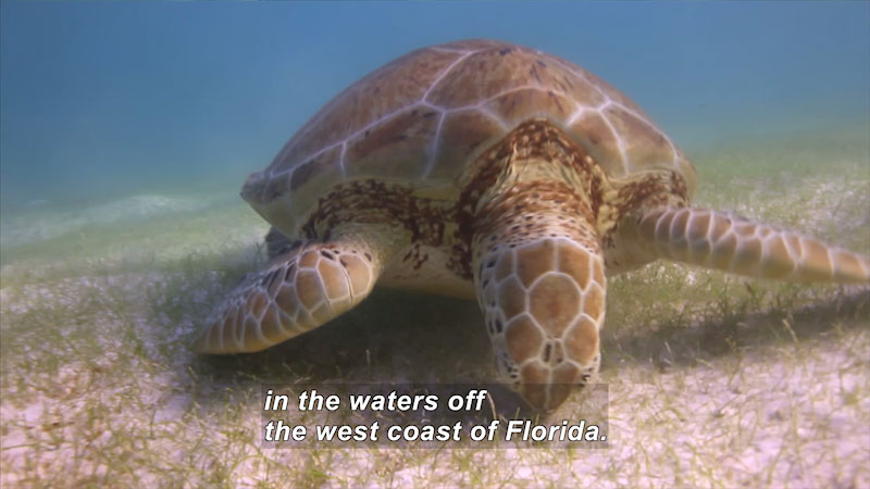 Still image from The Science Behind: A Florida Sea Turtle Study