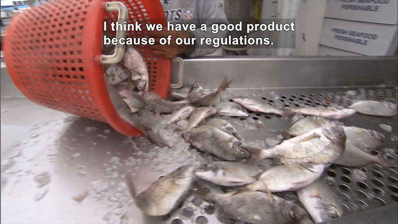 Still image from Get to Know Your Seafood From Ocean to Plate