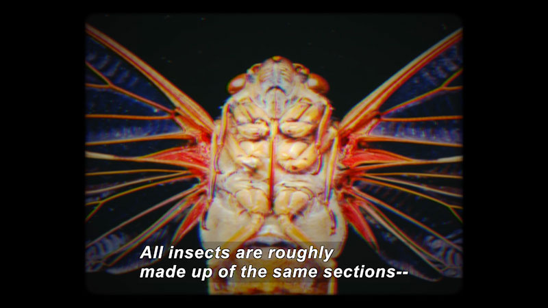 Still image from The Brain Scoop: How to Pin an Insect