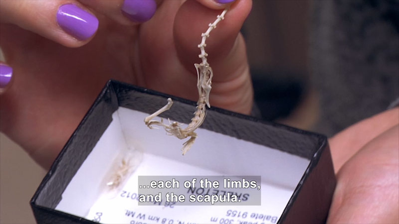 Still image from The Brain Scoop: Little Skeletons (Chicago Adventure, Part Three)