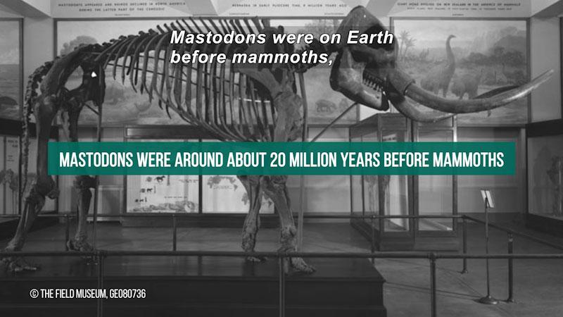 "Still image from The Brain Scoop: Mammoths vs. Mastodons--Can We ""De-Extinct"" Them Both?"