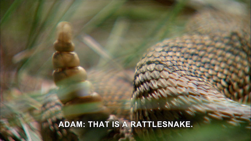 Still image from Jack Hanna's Wild Countdown: Why in the World