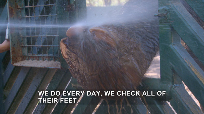 Still image from Jack Hanna's Wild Countdown: Paws & Claws