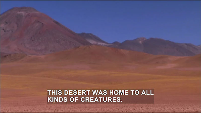 Still image from Jack Hanna's Wild Countdown: Countdown to Discovery