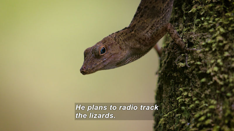 Still image from Lizards Looking for the Way Home