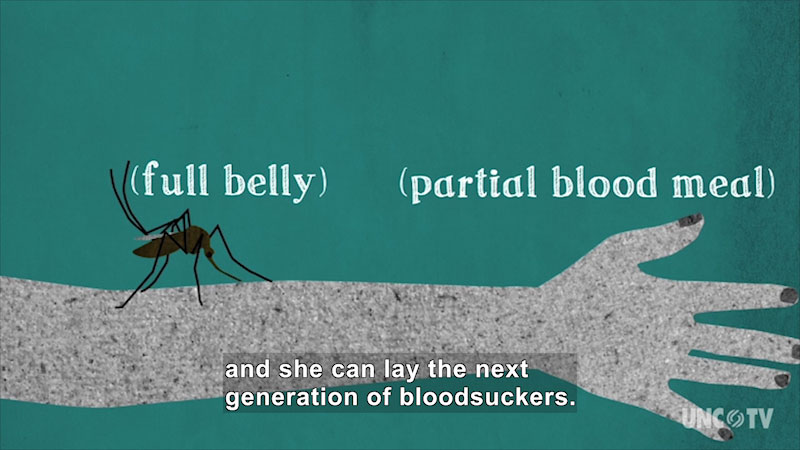Still image from Seasonal Science: Asian Tiger Mosquitoes