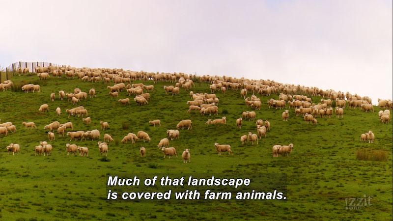 Still image from No More Skinny Sheep