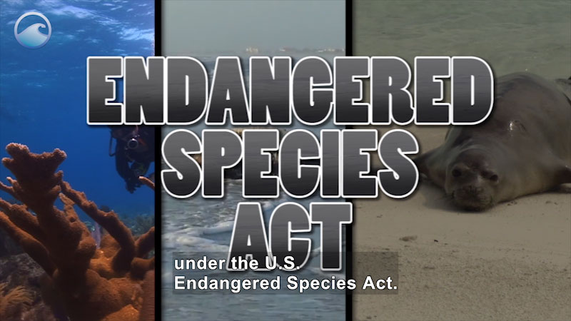 Still image from Endangered Ocean: The Endangered Species Act