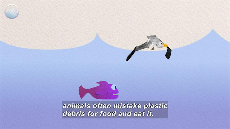 Still image from Trash Talk: Impacts