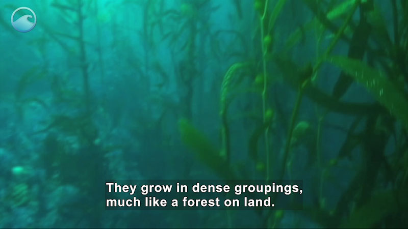 Still image from Underwater Forests
