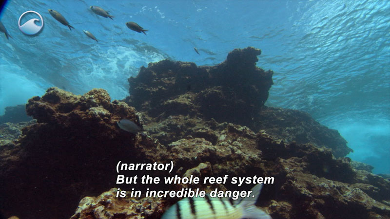 Still image from Coral Comeback: Rainforests of the Sea