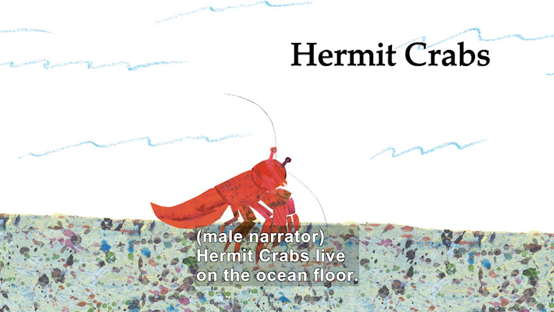 Still image from About Hermit Crab and His Friends
