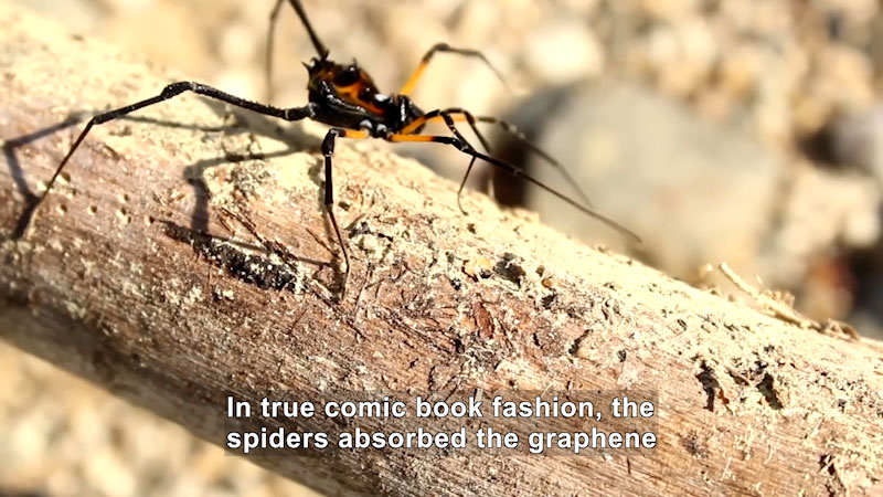 Still image from Could Bioengineered Spider Silk Get Us a Space Elevator?