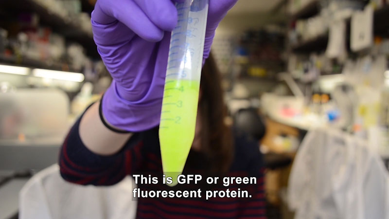 Still image from Green Fluorescent Protein: What Is This Thing?!