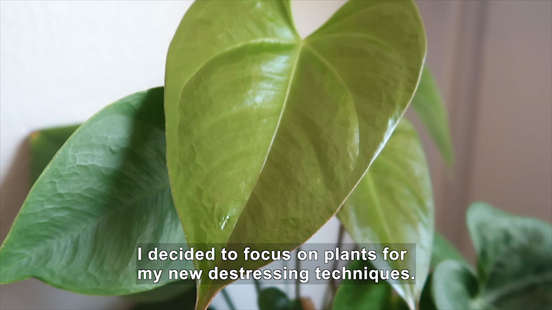 Still image from How Do Plants Handle Stress?