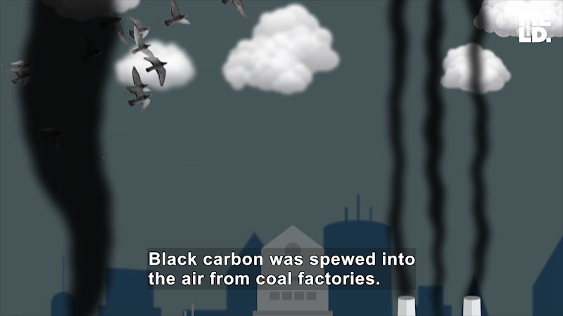 Still image from The Brain Scoop: Sooty Birds Share Dirt on Air Pollution