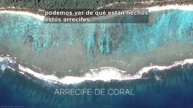 Still image from Coral Bleaching: A Breakdown of Symbiosis (Spanish)