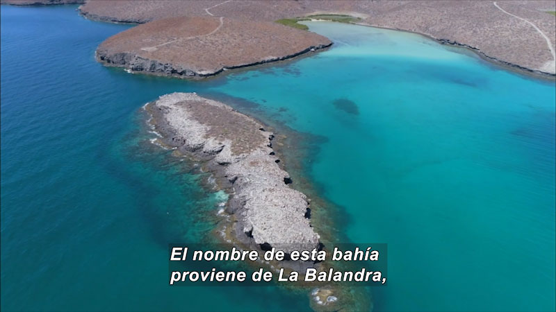 Still image from Inside the Sea: Cabo Pulmo--Sanctuary of Sea, Land, and People (Spanish)