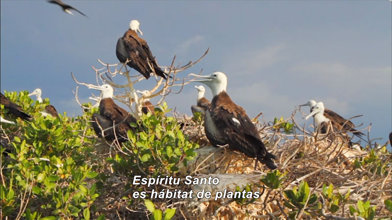 Still image from Inside the Sea: Espíritu Santo Archipelago National Park--Natural Sanctuary in Recovery (Spanish)