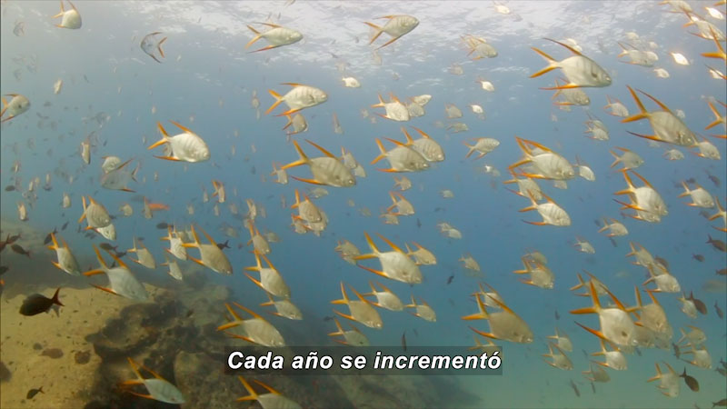 Still image from Inside the Sea: The Story of One of the Most Beautiful Bays in the World (Spanish)
