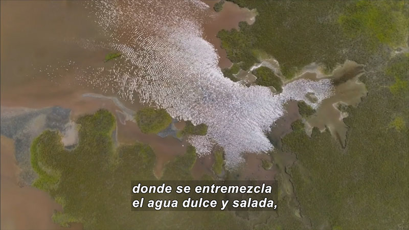 Still image from Inside the Sea: Whale Shark in the Mexican Pacific (Spanish)