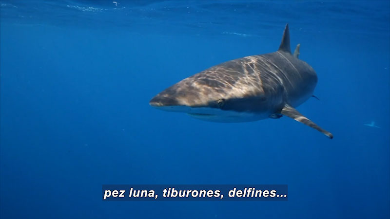 Still image from Inside the Sea: Seabirds in the Mexican Pacific (Spanish)