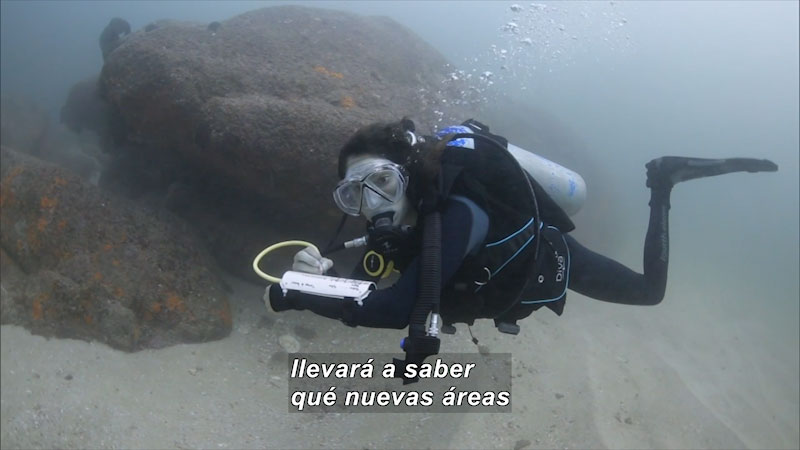 Still image from Inside the Sea: Marine Reserve Network (Spanish)